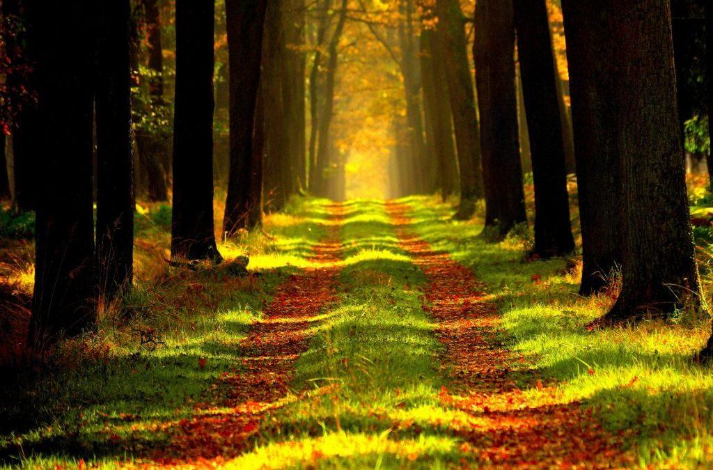 Coaching im Wald